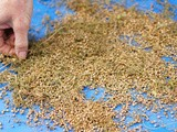 Winnowing Seeds