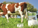 Nutritional Facts of Raw Milk