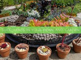 Succulents in your home and garden