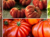 What Are Mealy Tomatoes? How To Avoid Unpleasant Tomato Texture