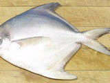 White Pomfret, Silver Pomfret, Pompano, Palmburo Fish – whats the difference