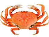 Dungeness crab vs snow crab