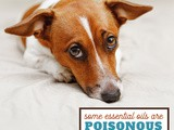 Are Essential Oils Safe for Dogs