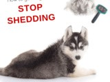 How to Put a Stop to Shedding in Dogs