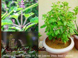 Amazing Health Benefits Of Tulsi Leaves (Holy Basil Leaves)