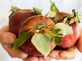 Apple, Fennel, & Kohlrabi Salad with Maple Roasted Pecans